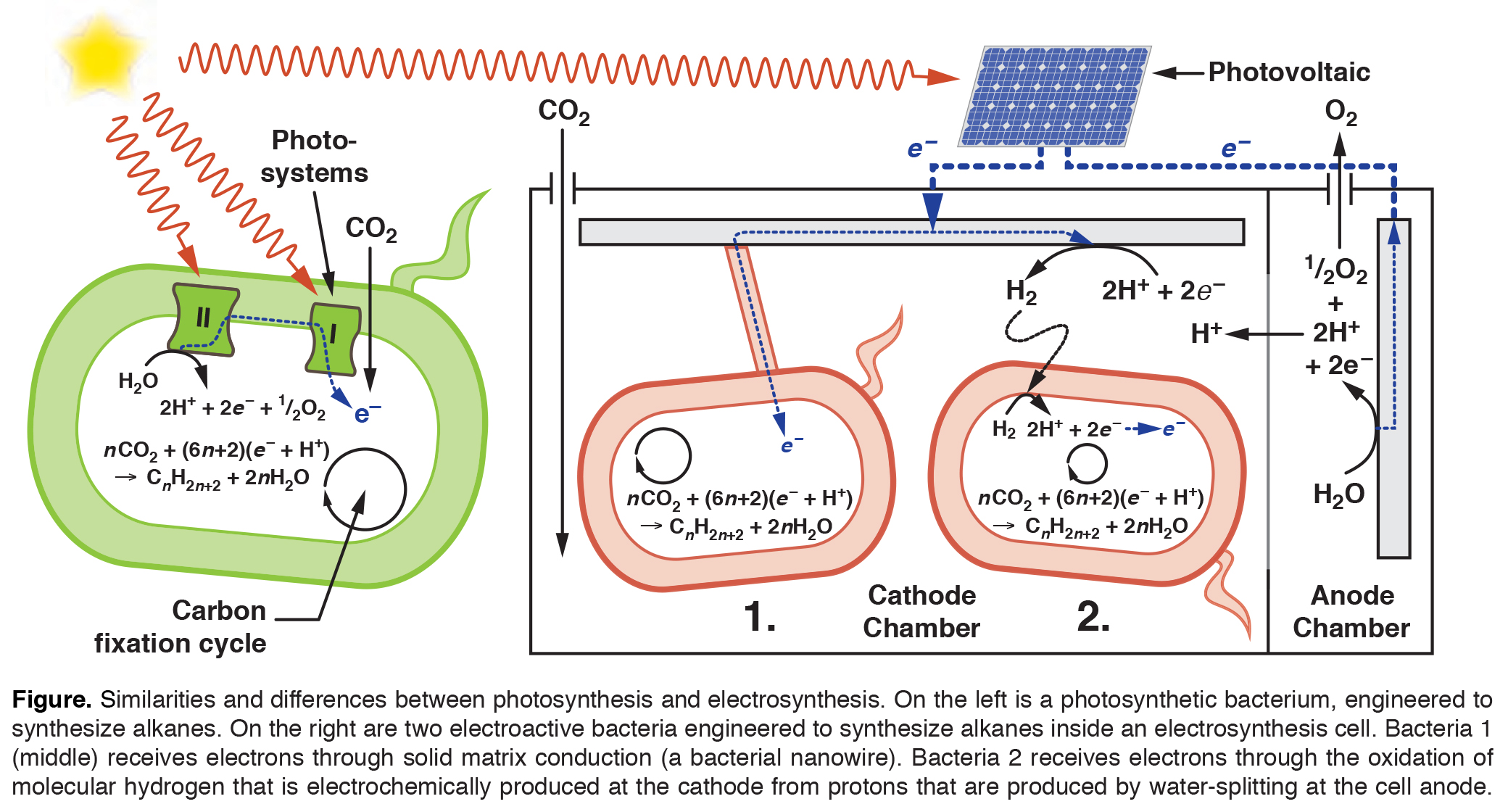 Early Evolution of Photosynthesis
